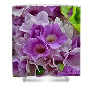 Mansoa Alliacea Shower Curtain