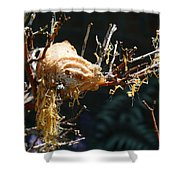 Mantids Hatch Shower Curtain