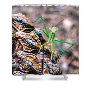 Mantis On A Pine Cone Shower Curtain