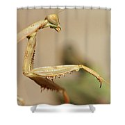 Mantis On The Hunt Shower Curtain