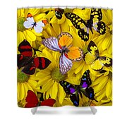 Many Butterflies On Mums Shower Curtain