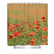 Many Poppies Shower Curtain