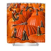 Many Pumpkins In A Row Art Prints Shower Curtain