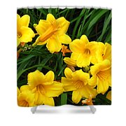Many Summer Lillies Shower Curtain
