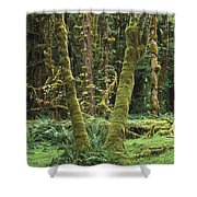 Maple Glade Quinault Rain Forest Shower Curtain