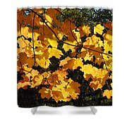 Maple Gold Shower Curtain