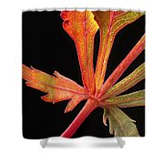 Maple Leaf Detail Shower Curtain