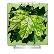 Maple Leaf In The Laurel Shower Curtain