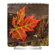 Maple Leaf On Oak Stump Shower Curtain