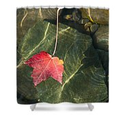 Maple Leaf On Water Shower Curtain