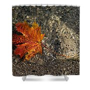 Maple Leaf - Playful Sunlight Patterns Shower Curtain