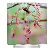 Maple Leaf Seed Pods   Shower Curtain