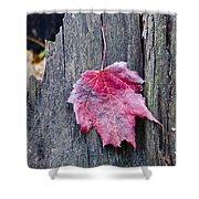 Maple Leaf - Uw Arboretum - Madison Shower Curtain