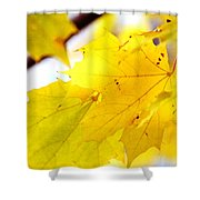 Maple Leaves At Autumn Glory 1 Shower Curtain