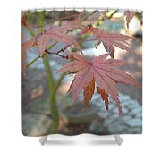 Maple Leaves Shower Curtain