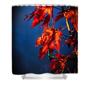 Maple Leaves Shadows Shower Curtain