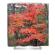 Maple Rush In The Fall Shower Curtain