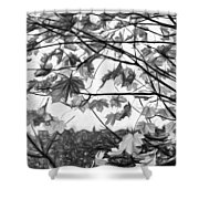 Maple Sunset - Paint Bw Shower Curtain