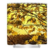 Maple Sunset - Paint Shower Curtain