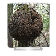 Maple Tree - White Mountains New Hampshire Shower Curtain