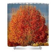 Maple Tree Shower Curtain