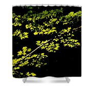 Maples Against Black Shower Curtain