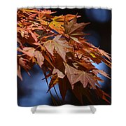 Maples In Spring 2013 Shower Curtain