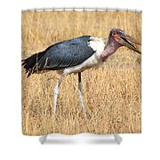 Marabou Stork Kenya Shower Curtain