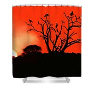 Marabou Tree Shower Curtain