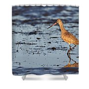 Marbled Godwit At Sunset Shower Curtain