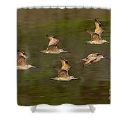 Marbled Godwit Flock Flying Shower Curtain