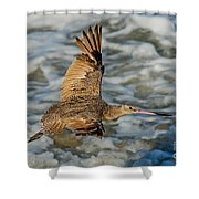 Marbled Godwit Flying Over Surf Shower Curtain