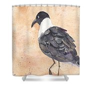 March Of The Laughing Gull Shower Curtain