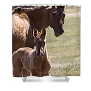 Mare And Foal   #0659 Shower Curtain