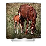 Mare With Foal Shower Curtain