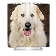 Maremma Sheepdog Shower Curtain