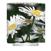 Marguerite Blossom Shower Curtain