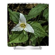 Marie's Trillium Shower Curtain