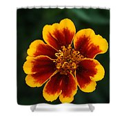 Marigold Shower Curtain