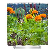 Marigolds Shower Curtain