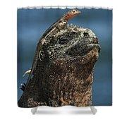 Marine Iguana And Lava Lizard Shower Curtain