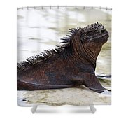 Marine Iguana Galapagos Shower Curtain
