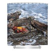 Marine Iguana Trio And Sally Lightfoot Shower Curtain