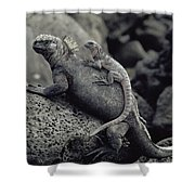 Marine Iguanas Galapagos Islands Shower Curtain