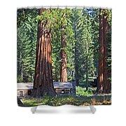 Giant Sequoias Mariposa Grove Shower Curtain