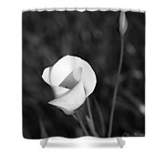 Mariposa Lily 2 Shower Curtain