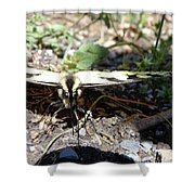 Mariposa Up Close Shower Curtain