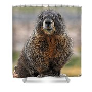 Marmot Shower Curtain