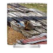 Marmot Resting On A Railroad Tie Shower Curtain