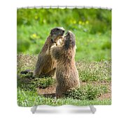 Marmots Shower Curtain